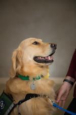 Anna the Service Dog