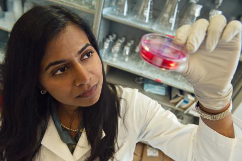 U-M researcher and Internal Medicine professor Santhi Ganesh, MD