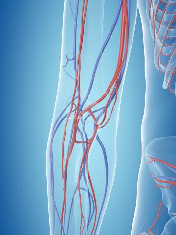Ilustration with turquoise background showing vascular system of arm