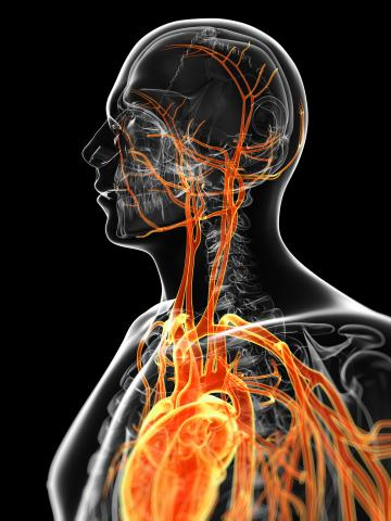Illustration with black background showing veins and arteries in head, neck and heart area
