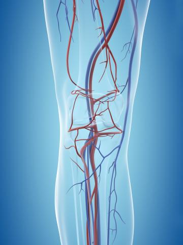 Illustration with turquoise background showing vascular system of one leg